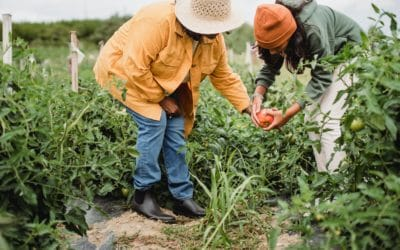 Where can you find locally grown food?